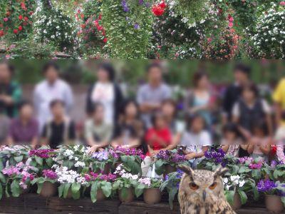 kakegawa_14.jpg