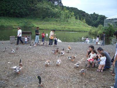 kakegawa_39.jpg