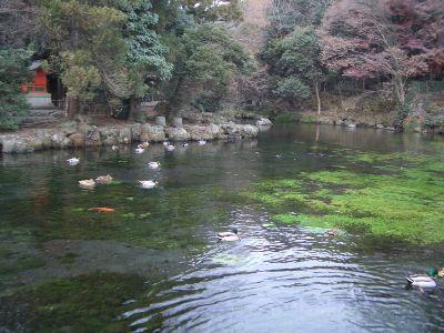 fujikawa_11.jpg