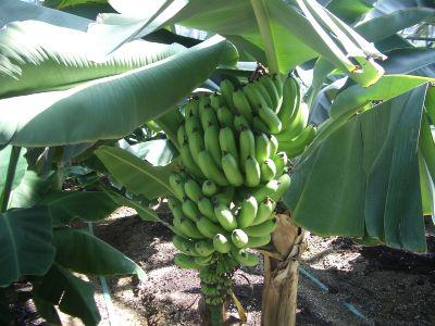fruit_08.jpg
