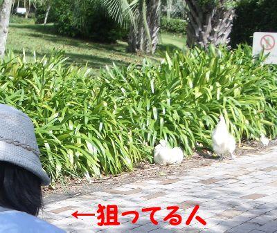 fruit_13.jpg