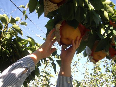 fruit_17.jpg