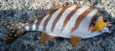 fish06.jpg